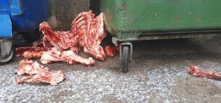 Prie konteinerio - išmėsinėtos kiaulės kaulai