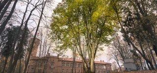 Europos metų medžio konkurse - ir Raudonės pilies reklama