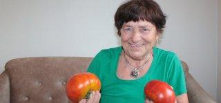 Pomidorai galiūnai! Pasidžiaukime derliumi