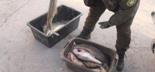 Jurbarke nustatyta, kad žuvys buvo sugautos draudžiamu ne mėgėjų žvejybos įrankiu