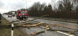 Vėjuotas savaitgalis Jurbarke trikdė eismą ir elektros tiekimą