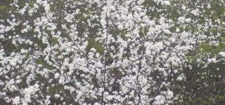 Panemunių regioninis parkas kviečia pasigrožėti ypatingų augalų žiedais