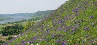 Birželio 5-oji – Pasaulinė aplinkos diena