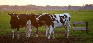 Smulkiuosius ūkininkus pasieks 200 eurų išmoka