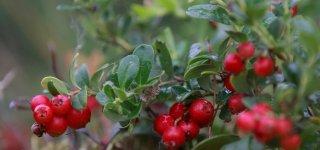 Gamtininko užrašai: kas liko iš vasaros ir kas pranašauja rudenį