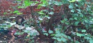 Jurbarko dvaro parke apsigyvenęs benamis į nakvynės namus nepriimamas