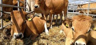 Pieno sektoriaus ateitis – kooperatyvai.