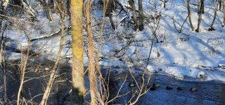 Nei šalčiais, nei sniego danga ši žiema nėra rekordinė