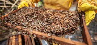 Svarbu: bičių laikytojai jau gali teikti paraiškas už papildomą bičių maitinimą