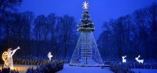 Padovanokite miestui kalėdinę eglę
