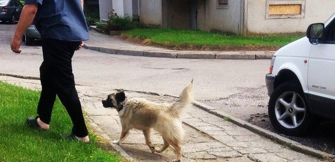Skaitytojo atsiųsta minėto agresyvaus benamio šuns nuotrauka.