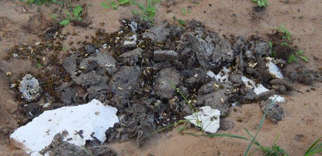 Tai tik dalis milžiniško širšių lizdo, išnešto iš namo. Pilkos spalvos koriuose liko tūkstančiai dar neišsiritusių vabzdžių.