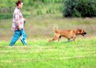 Nedrausmingiems šunų augintojams Jurbarke prasidėjo neramios dienos