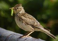 Paukščiai prognozuoja šaltą pavasarį?