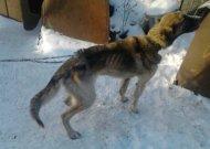 Reportažas: gyvūnų gelbėjimo operacija Jurbarko rajone