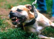 Laiškininkai neatsigina nuo agresyvių šunų