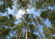 Dėl gaisro pavojaus draudžiama lankytis ir Jurbarko krašto miškuose