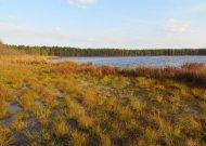 Spalis. Tokio šlapio rudens Viešvilės valstybinio gamtinio rezervato istorijoje dar nebuvo