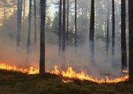 Dėl ekstremaliosios situacijos dėl stichinės sausros paskelbimo Jurbarko rajono savivaldybės teritorijoje