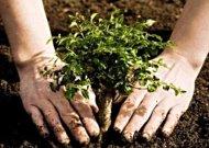 Grįžtame prie temos – augintinių kapinaitės. Vietoj antkapio – medelis? BALSUOJAM!