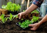 Vykite slogias mintis – keliaukite į sodą ir daržą