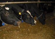 Karantino metu ūkininkai gali gauti 257 eurų išmoką