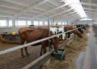 Pieno gamintojai sulauks valstybės pagalbos