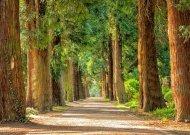 Sprendimai namų ūkiams, norintiems tausoti gamtą