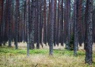 Saugant perinčius paukščius  nuo kovo vidurio nebegalima pjauti medžių
