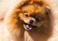 Jubiliejinėje šunų parodoje Jurbarke – net 88 veislių atstovai